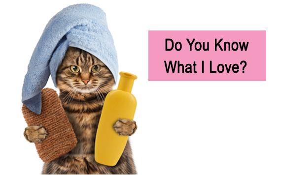 Cara Merawat Kucing Yang Tidak Sekedar Hewan Tapi Juga Teman