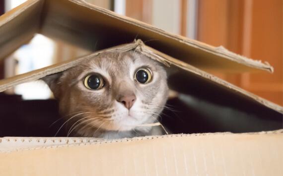 Jangan Ngaku Cat Lover Kalau Belum Simak 5 Hal ini